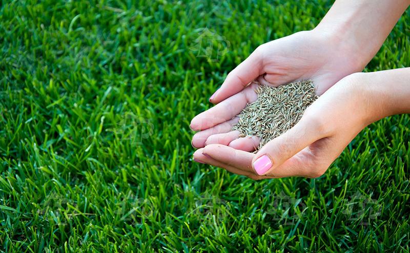 Картинки по запросу Семена газона и смеси